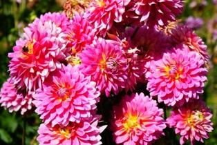 изображения цветов, бесплатные фото цветов, фото цветов, названия цветов