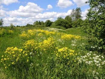 пейзажи с цветами, полевые цветы